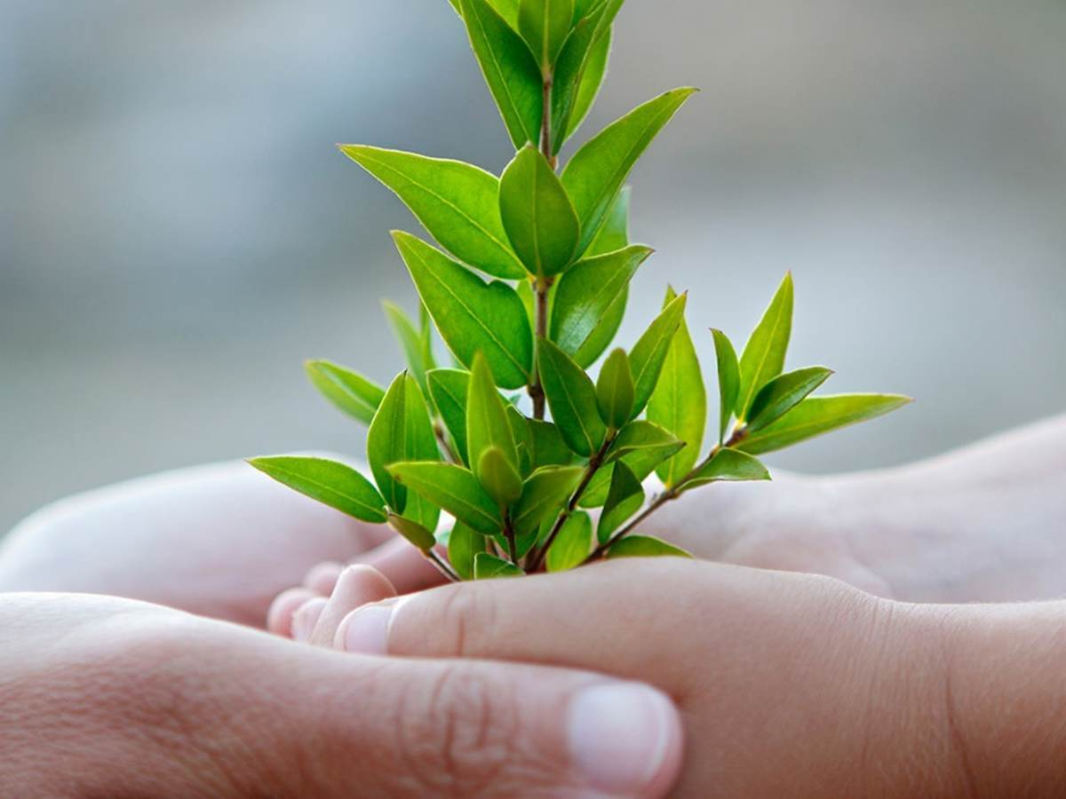 Two hands holding a baby tree
